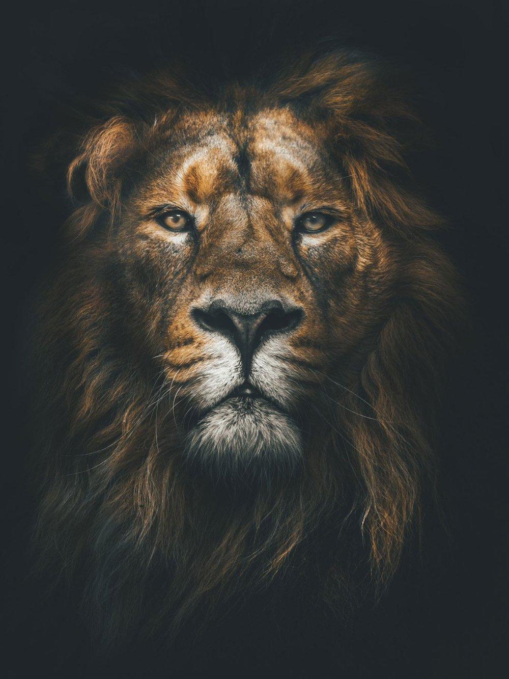 Lion Web Design
